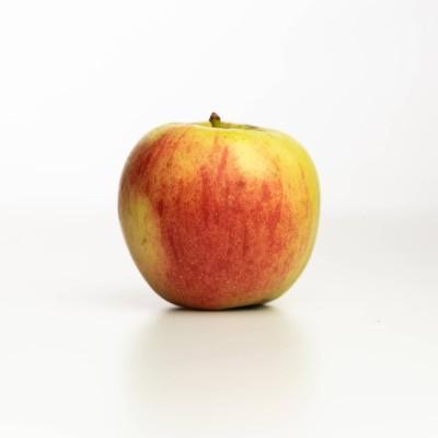 Pomme Delbardestival des Vergers Tissot